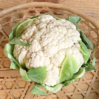 季節のお野菜ギフトセット(小) 【毎月1回お届け(6ヶ月間)】 商品写真サムネイル