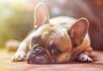s_dog-1224267_1280 (1)