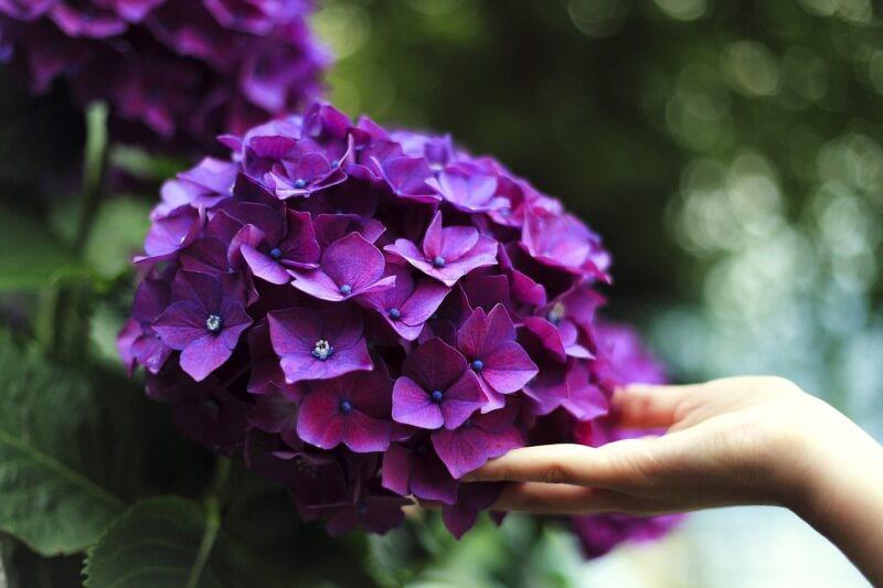 s_bloom-1853360_1280 (1)