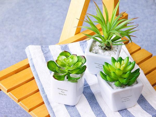 観葉植物3種類
